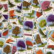 Arboretum társasjáték - kártyák