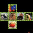 V-Cube 2x2 egyenes kocka madarak 1