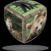 V-Cube 2x2 versenykocka lekerekített Vadállatok