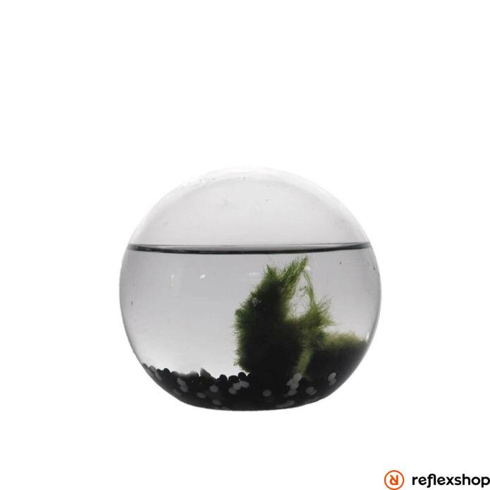 Ecosphere Ornárium gömb